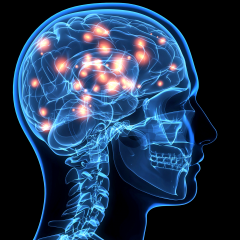 Lectura – Cómo aprende el cerebro. Las claves para la educación.
